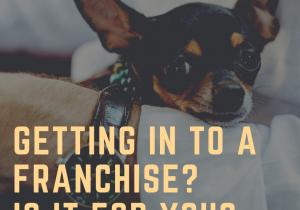 Puppy dog franchise image